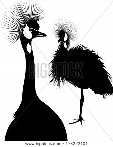 Balearica regulorum. Vector silhouette of standing Crowned Crane. The Cranes. birds The Cranes
