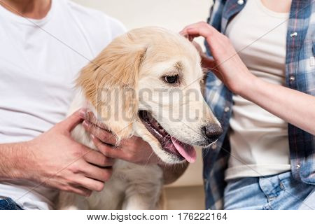 Partial view of young couple petting golden retriever puppy