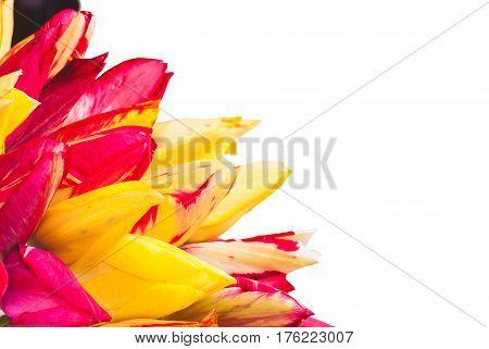 Colorful Tulipes_3