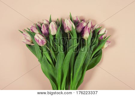 Pink tulips on pink background. Flat lay.