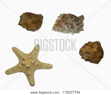 Decorative shells and starfish on a white background