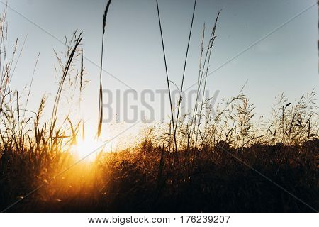 Beautiful Sun Light In The Evening In Summer Field And Sky. Sunset Rays. Atmospheric Moment. Warm Im