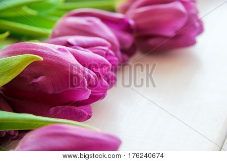large buds of purple tulips on the table