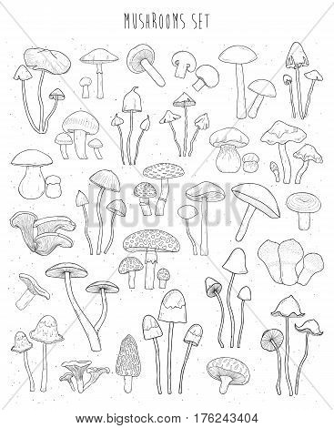 Collection of hand drawn different types mushrooms, Sketch vector illustration