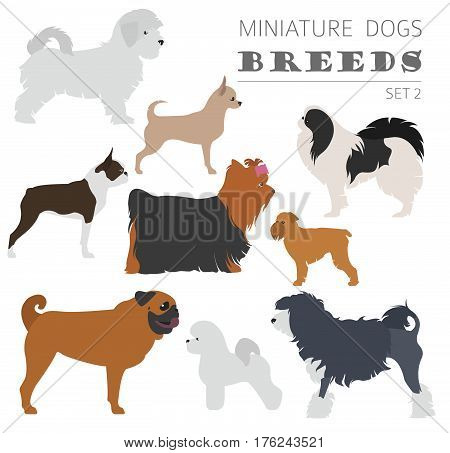 Collection Dog Hunting_34