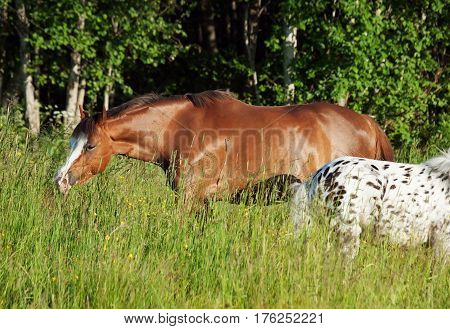 grazing welsh ponys in field at freedom