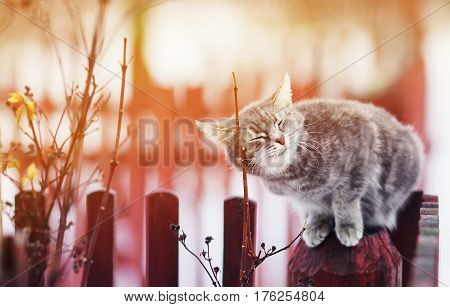 cute cat fondled on the fence his eyes closed from the pleasure in March on a Sunny day