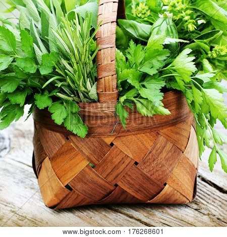 Basket with fresh herbs on wooden table