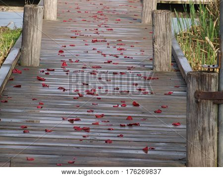 Rose petals line a wharf walkway from the night before are held into place with a light rain shower filling some of the wells in the petals.