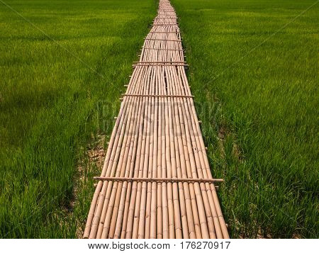 Rural Green rice fields and bamboo bridge.
