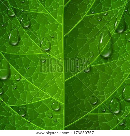 Macro view of green leaf surface with water drops. Morning dew, fresh spring foliage. Vector illustration. Leaves vein. Environment protection and ecology concept