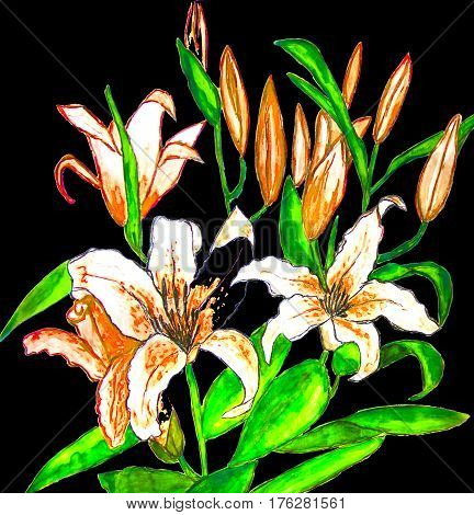 Hand painted picture watercolor -orange lilies on black background.