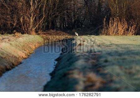 Blue Heron Sitting At Edge Of Ditch. Lit By Sunlight.