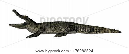 Caiman roaring isolated in white background - 3D render
