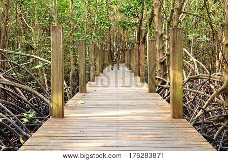 Wooden bridge in mangrove forest at Chanthaburi Thailand