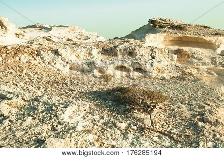 Mound of white sandstone with elements of flora in nature closeup view