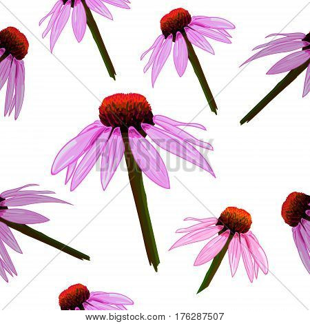 Seamless VECTOR pattern: yellow flowers on white background, echinacea sketch.