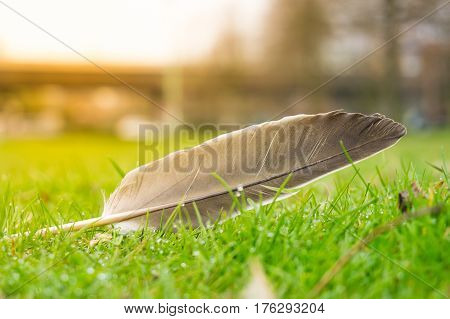 Close-up of a feather in the grass. A feather in the sunlight