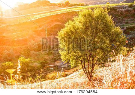 A ray of light breaks through the dramatic sky at sunset and hit a solitary tree on a hill. A landscape scene in Andalusia, Spain