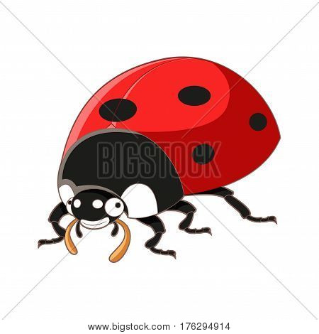 Vector image of the Cartoon smiling ladybird
