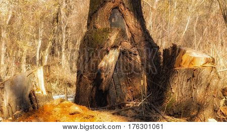 Thick trunk of an old tree in a fairy forest the background is very bright very beautiful