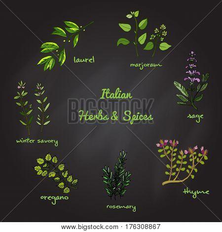 Italian herbs and spices winter savory, laurel, marjoram, oregano, rosemary, sage thyme Vector illustration