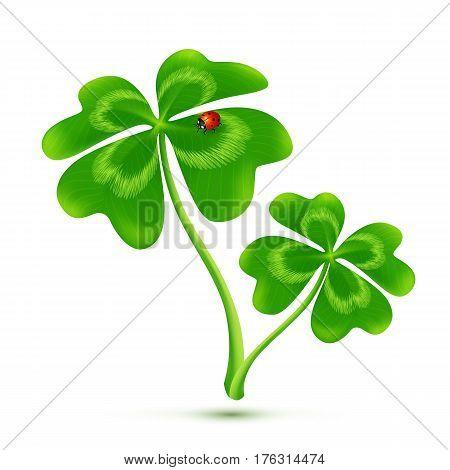 Couple of cartoon style four-leaf clovers with ladybug, vector illustration isolated on white background