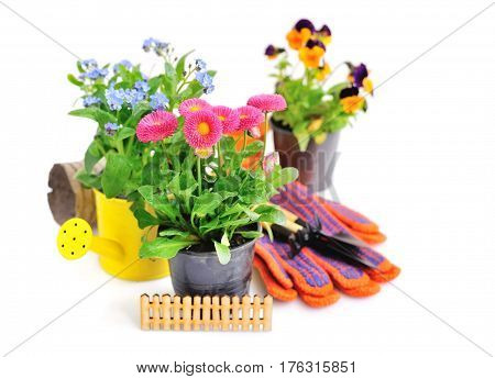 Marguerite Flowers And Other Spring Flowers And Garden Tools On A White Background