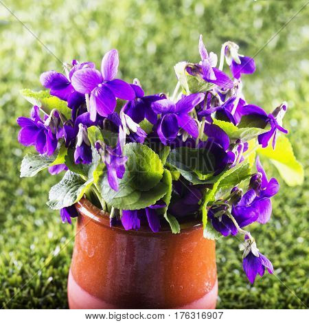 Violets in a vase over green grass square image