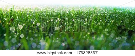 Dewy meadow at dawn. Drops of water on the blades of grass. Bottom decoration.