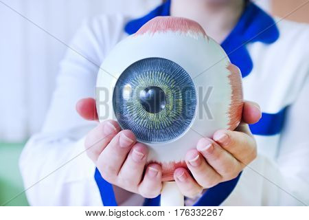 Ophthalmology oculus sample closeup. Ophthalmology, eye model close-up. The ophthalmologist is holding a model of the eye.