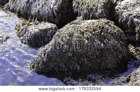 Close-up of moss covered rocks in the Halifax Harbor on a bright sunny day in September in Halifax, Nova Scotia