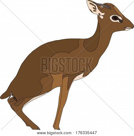 Portrait of a  sitting Damara Dik Dik, hand drawn vector illustration isolated on white background