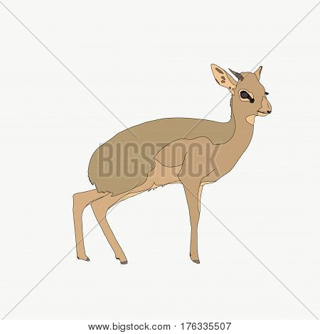 Portrait of a standing Damara Dik Dik, hand drawn vector illustration isolated on white background