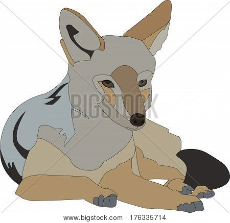 Portrait of a lying blackbacked jackal, hand drawn vector illustration isolated on white background