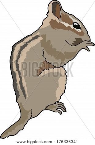 Gray chipmunk with light and dark stripes  down the body.