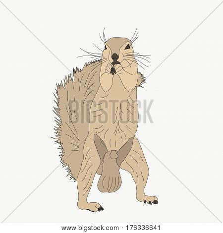 Portrait of a ground squirrel, hand drawn vector illustration isolated on white background