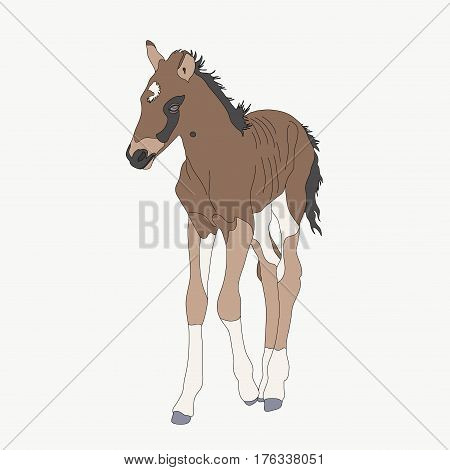 Portrait of a namib desert wild horse kitten, hand drawn vector illustration isolated on white background