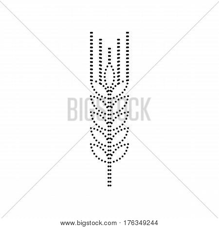 Wheat sign illustration. Spike. Spica. Vector. Black dotted icon on white background. Isolated.