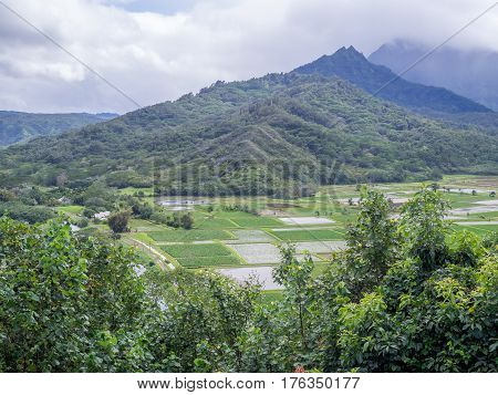 Hanalei Valley Taro fields on the Hawaiian island of Kauai. The Hanalei Valley has been an important agricultural site for as long as people have populated Kauai.