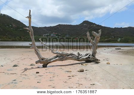 Dry tree at salt pond at Grande Saline, St. Barts, French West Indies