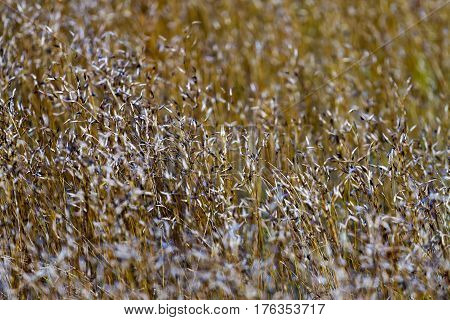 Flower grass dry beautiful with soft background in the Mukdahan Nation Park Thailand.