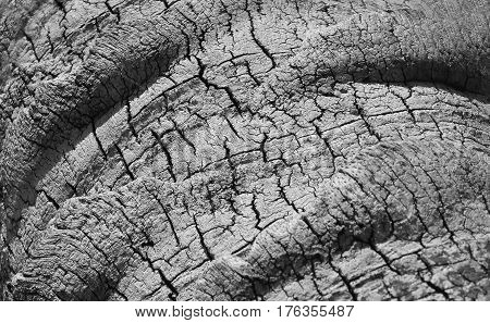 Closeup of a Tree trunk bark texture background