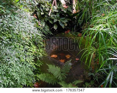 Pond in the Japanese garden located in Montevideo, Uruguay.