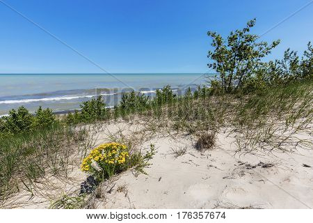 Sand Dune Ridge Looking Out Over Lake Huron - Pinery Provincial Park, Ontario, Canada