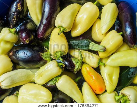 Light green pepper, green zucchini and eggplant, dark blue. Vegetables floating in the water, photographed from the top. Large group of fresh vegetables top view