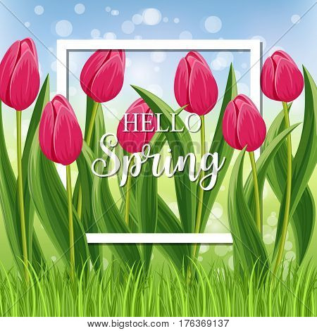 Hello spring banner with pink blooming tulip flower on blurred background vector illustration. Floral decorated spring design for holiday, seasonal celebration, nature feast congratulation template