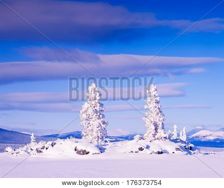 Snowy Honey Moon Island Tagish Lake Yukon T Canada