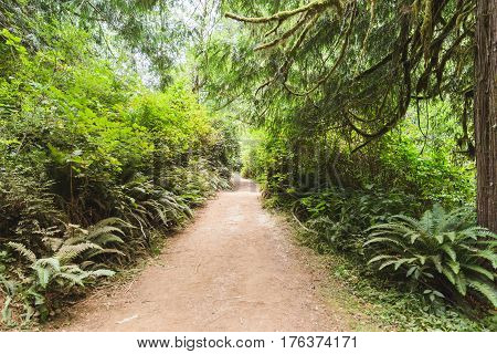 Dirt Path In A Lush, Green Forest