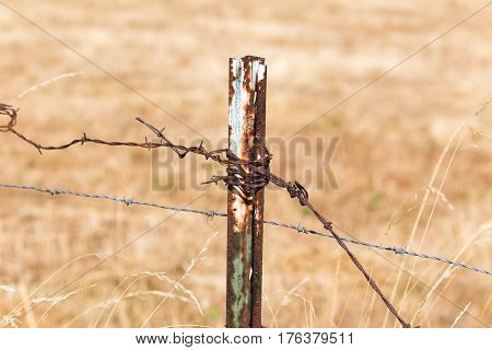 Steel post with barbed wire on a fence line.